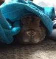 [ウサギ][うさぎ]