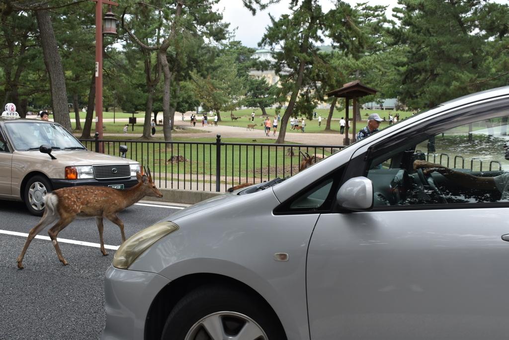 タクシーの運転手さんはいつものという雰囲気