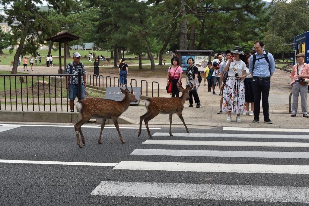 フリーダムな鹿たちを見てニンマリする観光客一同