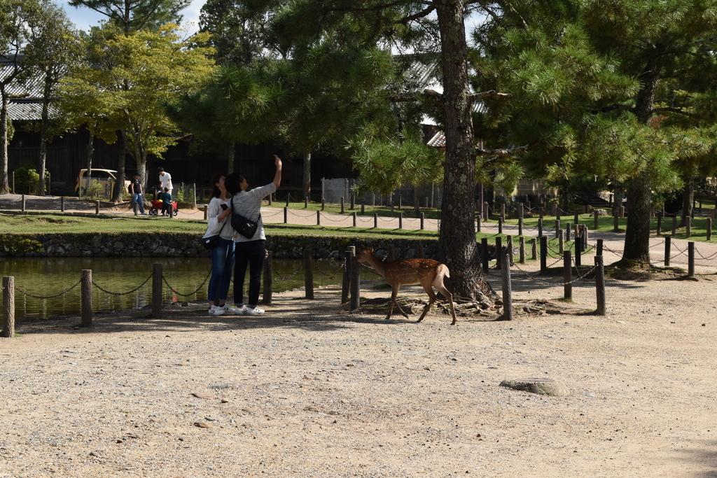 記念撮影をするカップルの方へ進む鹿さん