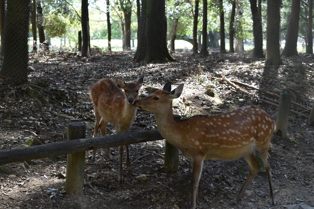 親子と思われる2頭の鹿