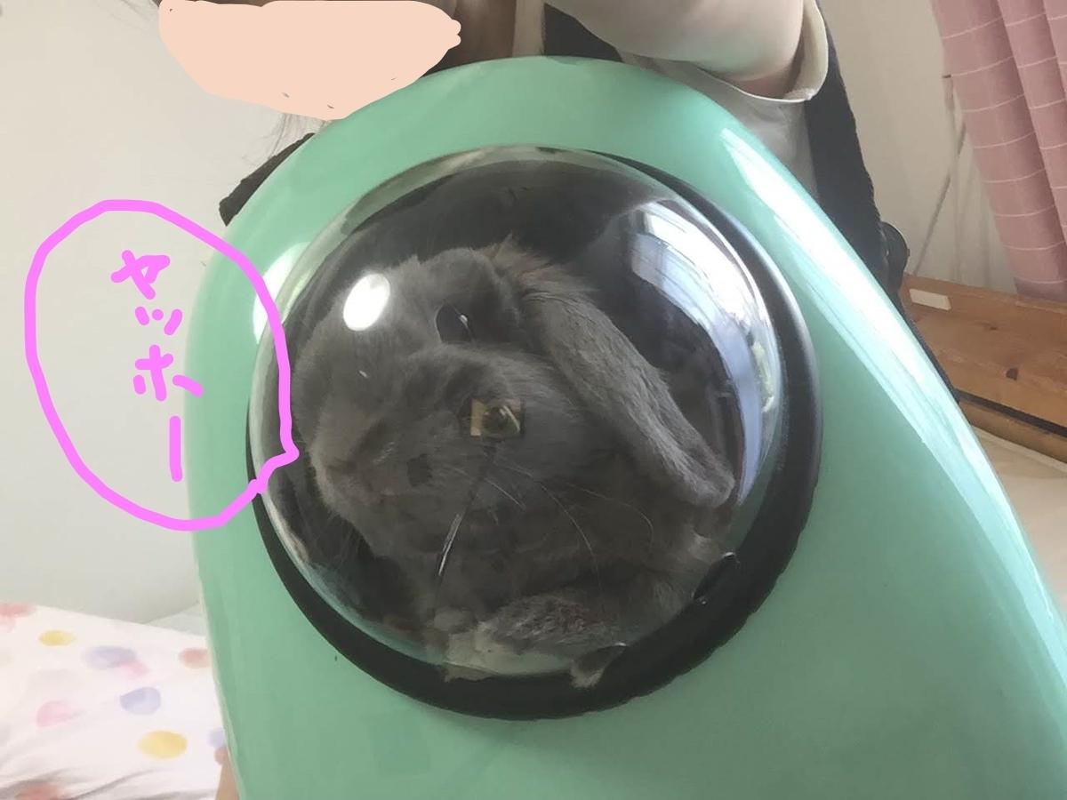 f:id:usagitonokurashi:20190712165253j:plain