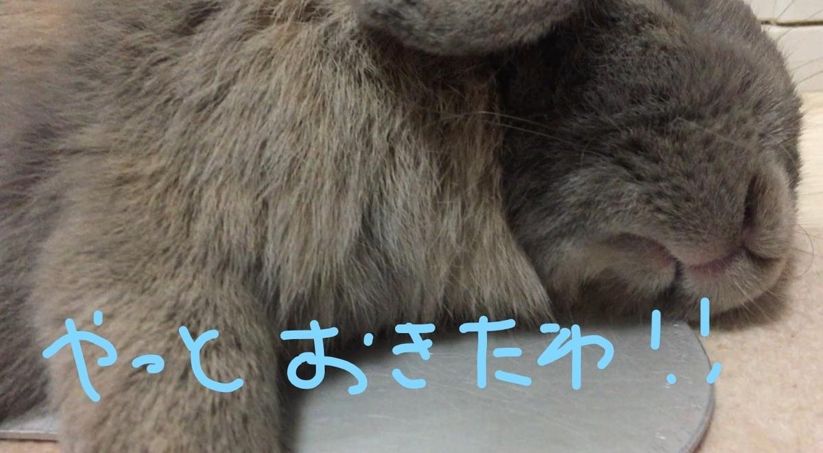 f:id:usagitonokurashi:20190822200458j:plain