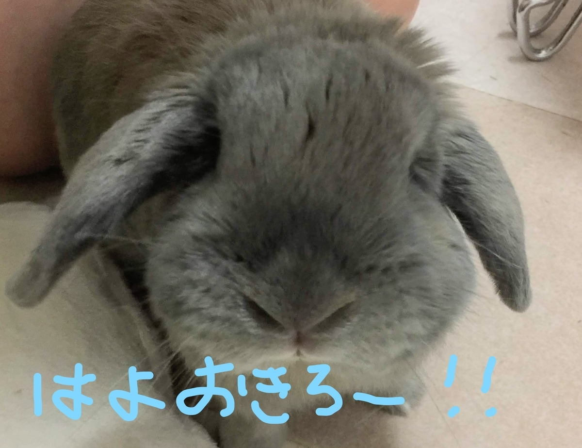 f:id:usagitonokurashi:20190822200503j:plain