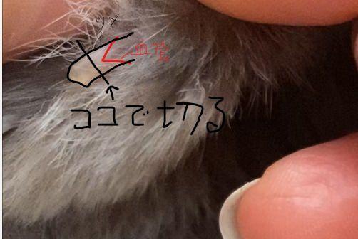 うさぎの爪の画像