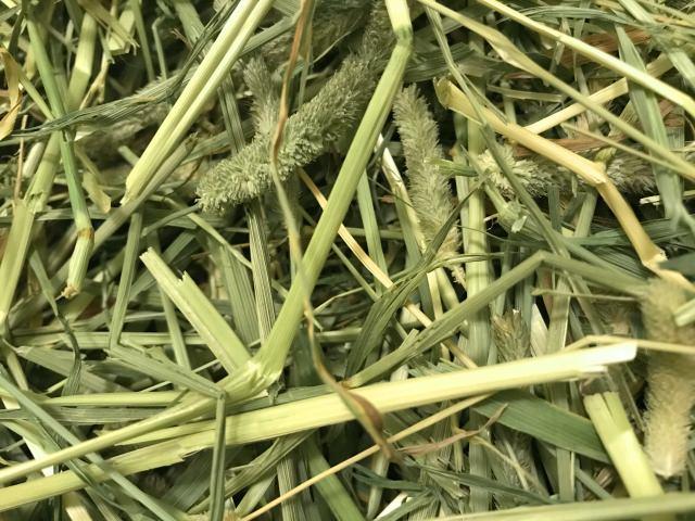 うさぎの牧草の種類