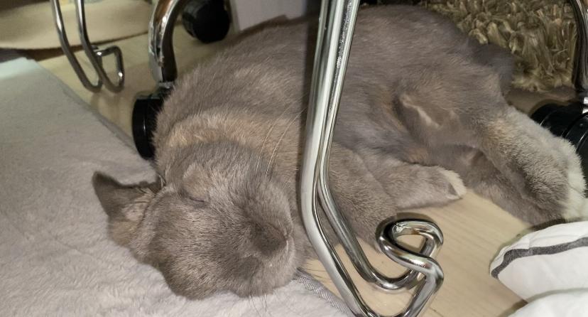 うさぎは何故ゴロンと倒れて寝るの?