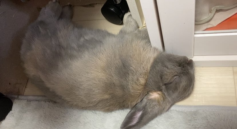 うさぎの睡眠時間は何時間なの?眠る時間帯と眠り方について