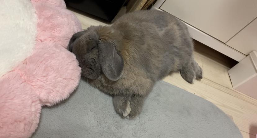 うさぎの睡眠時間