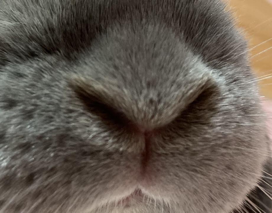 うさぎの鼻のしくみ
