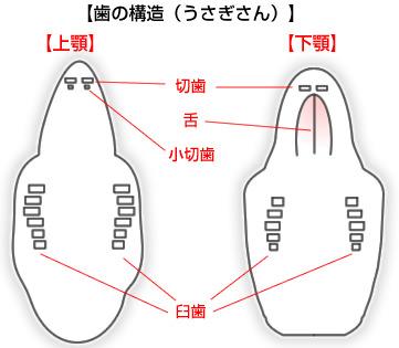 出典:みんなのどうぶつ病気大百科 https://www.anicom-sompo.co.jp/doubutsu_pedia/node/1143
