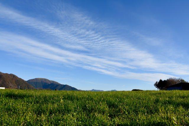 購入した牧草から感染する可能性は?
