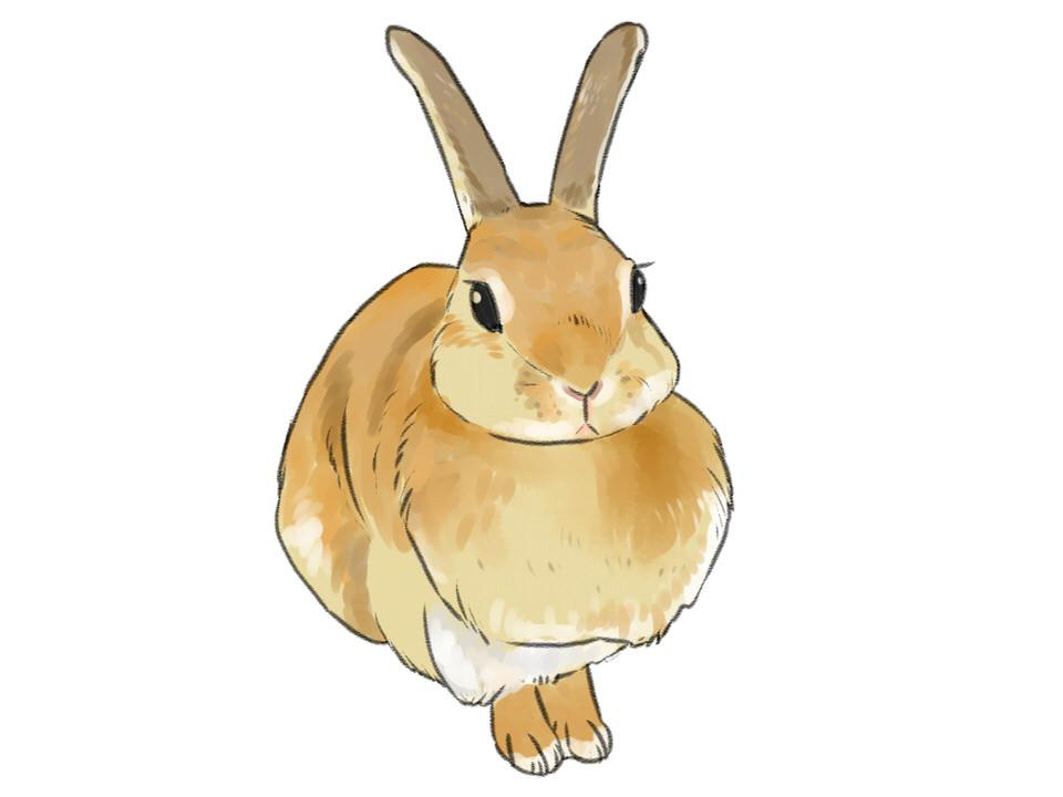 今回の兔ウィルス性出血病発生の経緯