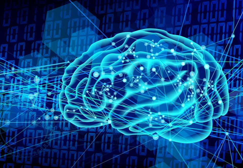 脳化指数(EQ)とは?