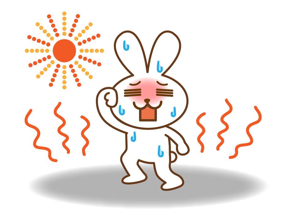 うさぎは暑さに弱い!
