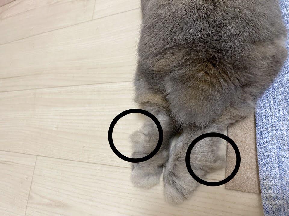 うさぎの足の裏の毛玉
