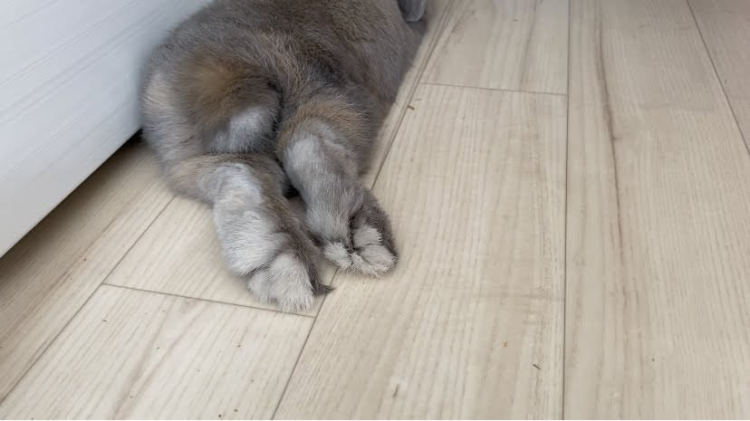 足裏の毛玉がない状態