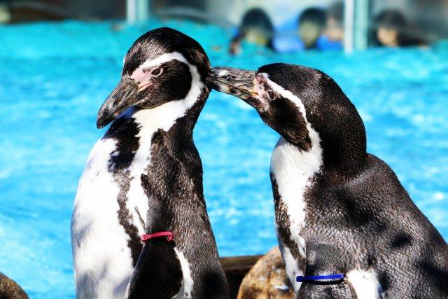 動物の世界には同性カップルがいる
