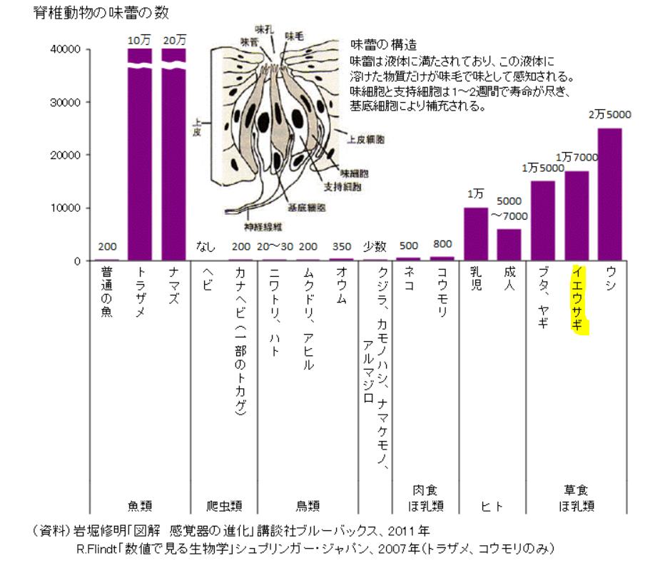 脊椎動物の味蕾の数