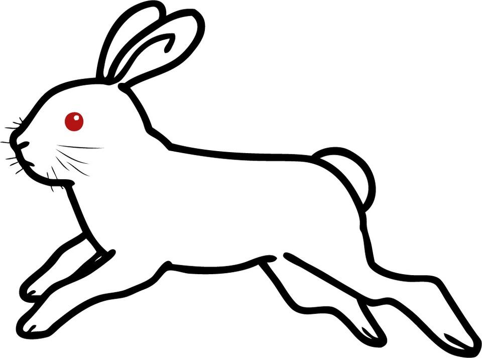 うさぎが走る速さはどれくらい?ジャンプ力もご紹介!