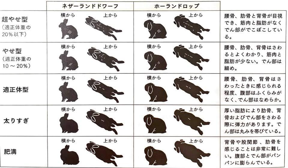 ボディ・コンディションスコア 引用元:うさぎと暮らす No.73