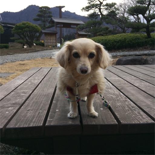 f:id:usako-k249:20170308153515j:image