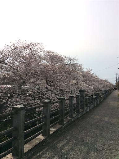 f:id:usako-k249:20170407140501j:image