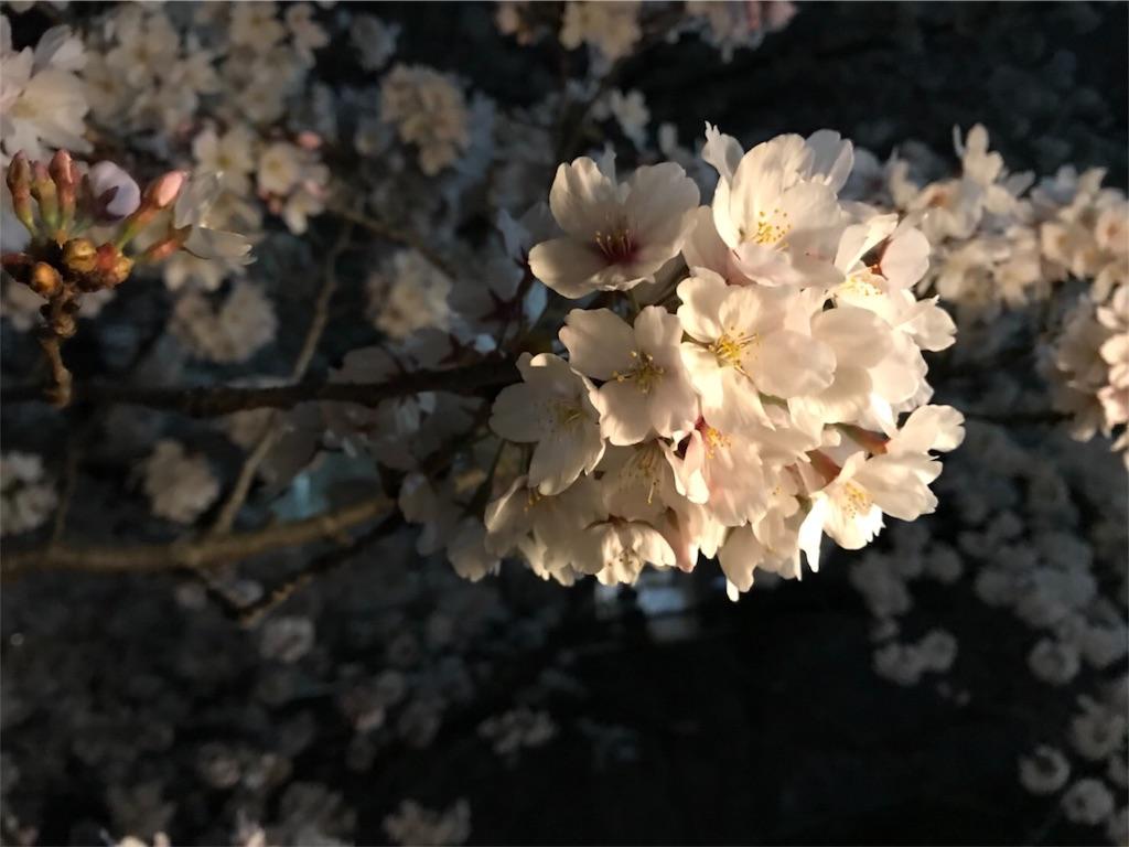 f:id:usako-k249:20180331152410j:image