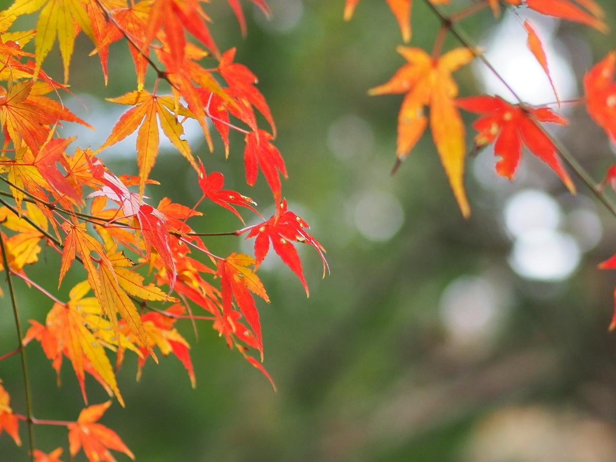 f:id:usako-no-blog:20201227133547j:plain