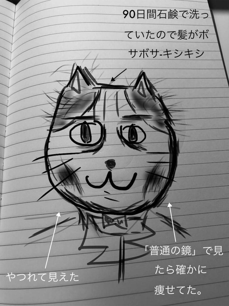 f:id:usakohiroshi242:20181111201331j:image