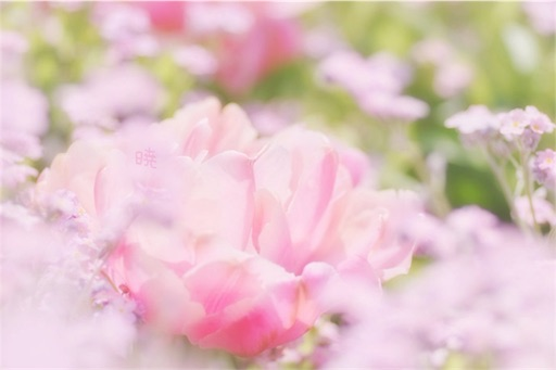 f:id:usaponchan:20170424065916j:image