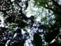 上石神井、影の癒し写真