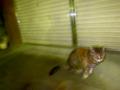 巣鴨のお猫、リコーgr3で撮影
