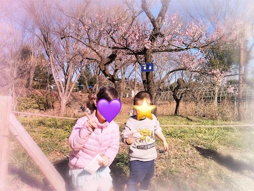 f:id:usasakumakuma:20170131151935j:image