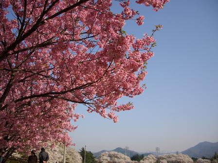 村松公園1.JPG