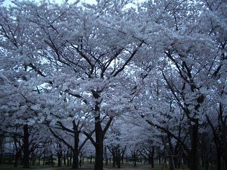 鳥屋野潟公園1.JPG