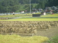 もう稲刈りの季節