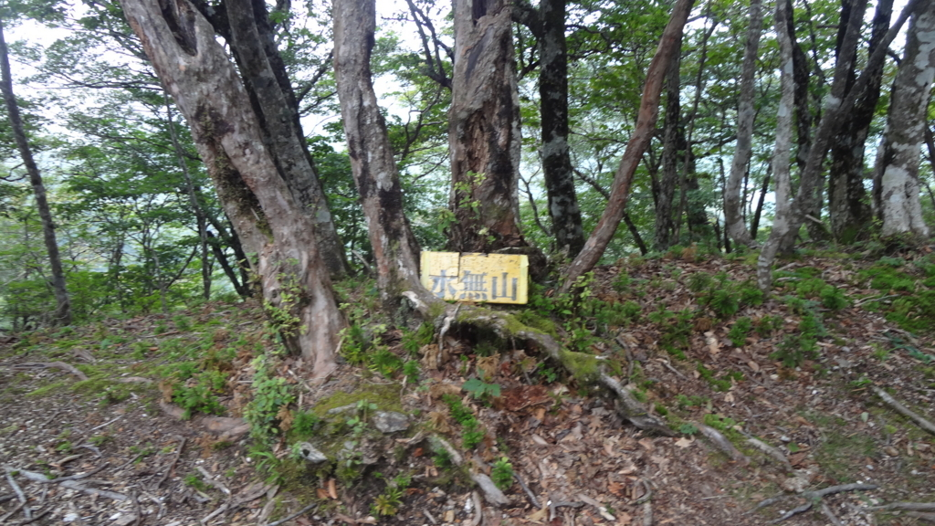 f:id:usausacafe:20170910213116j:plain
