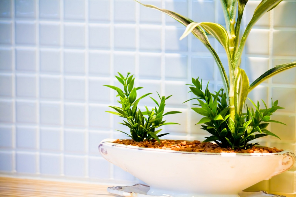 春のインテリアには観葉植物を上手に利用する