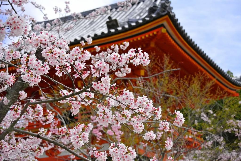 京都の桜の定番お花見スポットの名所