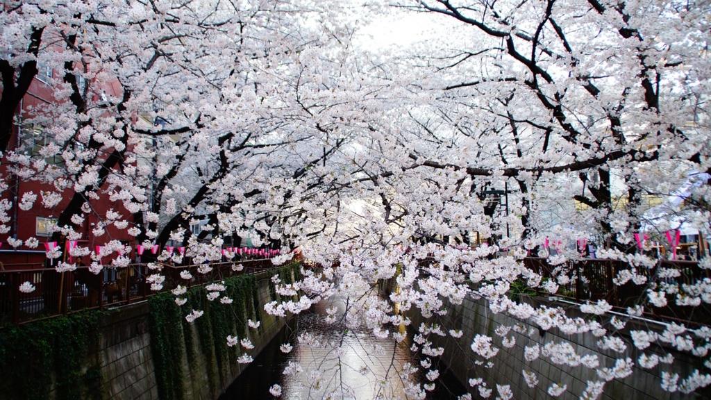 東京都内の絶景の桜の名所・お花見スポット