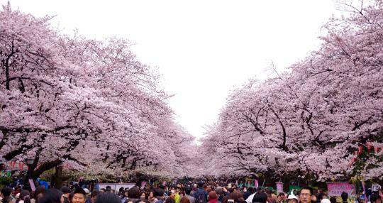 上野恩賜公園の桜は東京都内のお花見の名所
