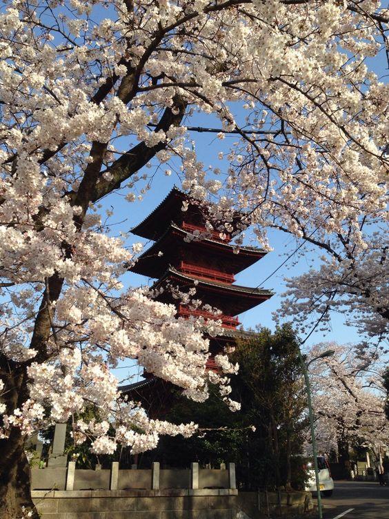 池上本門寺は東京都内の穴場お花見スポット