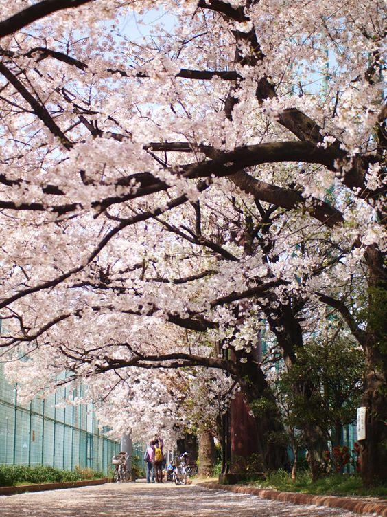 有栖川宮記念公園は東京都内の穴場お花見スポット