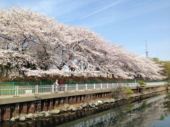猿江恩賜公園は東京都内の穴場お花見スポット