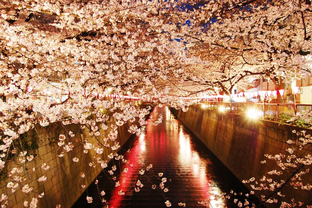 東京都内のライトアップ。夜桜のおすすめ花見スポット