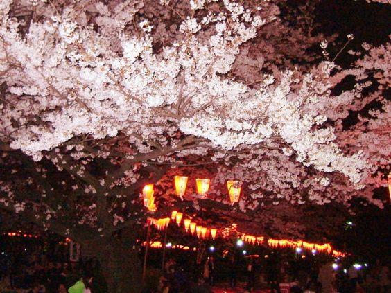 上野恩寵公園はおすすめのライトアップ夜桜スポット