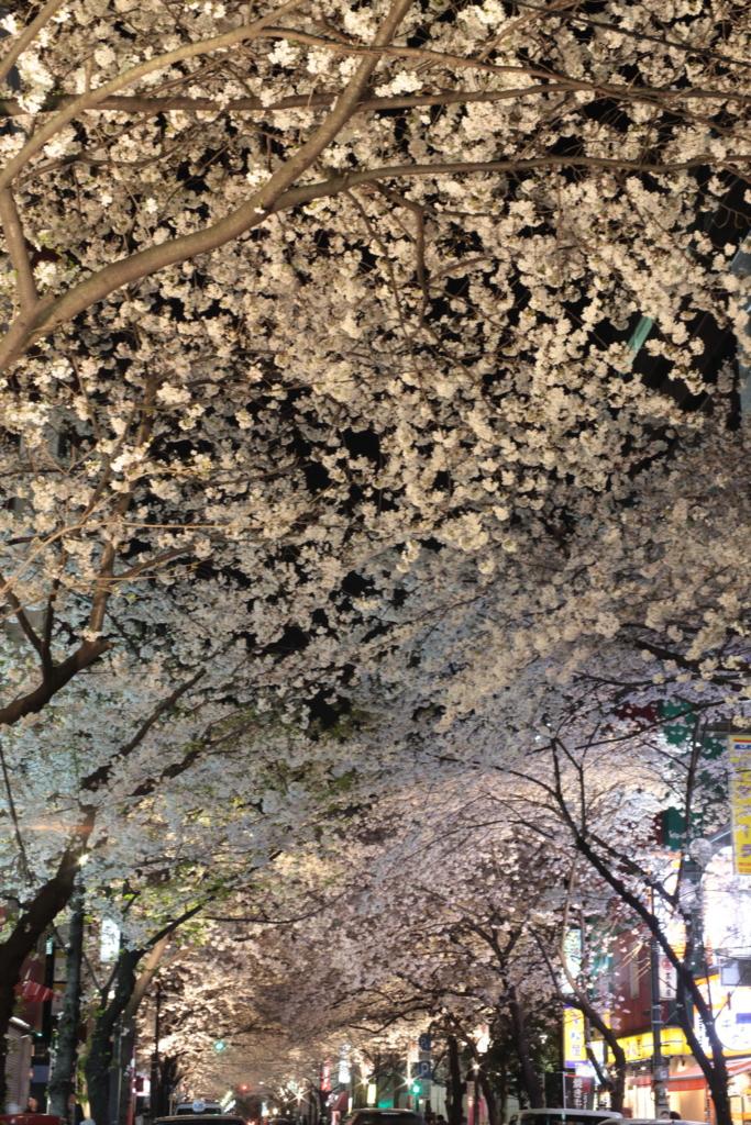 八重洲さくら通りはおすすめのライトアップ夜桜スポット