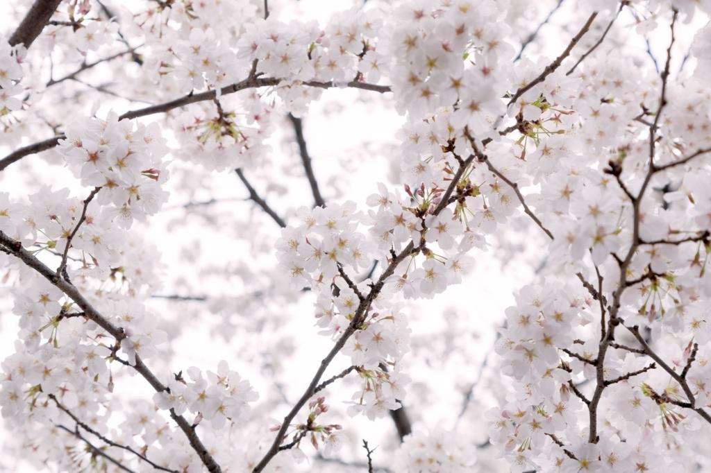 桜が楽しめる東京都内のカフェやレストラン