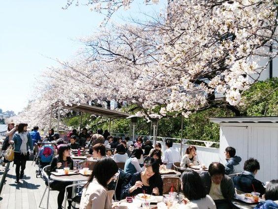 神楽坂のCANAL CAFEはお花見カフェ